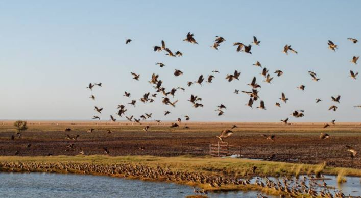 Duck season shot in the foot | Bill Tilley